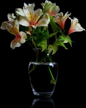 flowers summer flowers plant