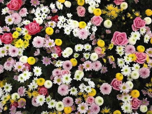 flowers texture flower carpet