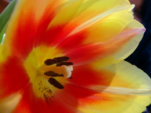 flowers yellow red