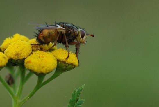 fly bug macro