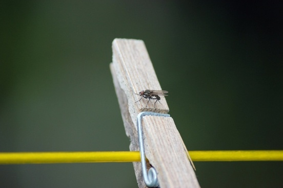 fly on a wooden peg