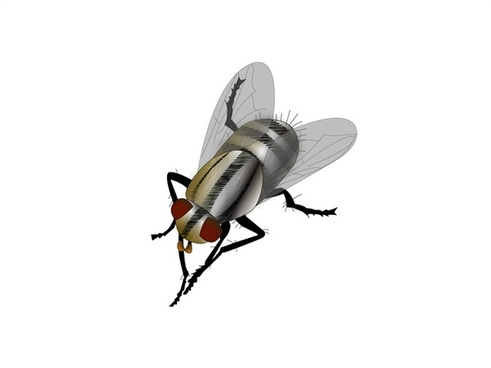 fly vector design with closeup illustration