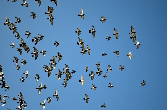 birds flying in the sky free stock photos download 16 688 free