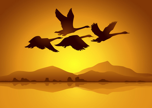 flying swan with sunset background vector