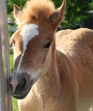 foal horse eye