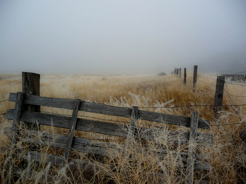 fog fence field