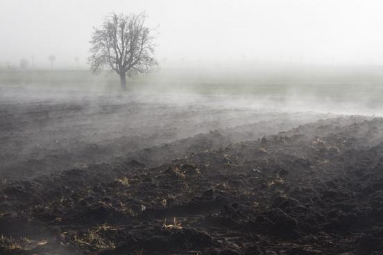 fog mood landscape