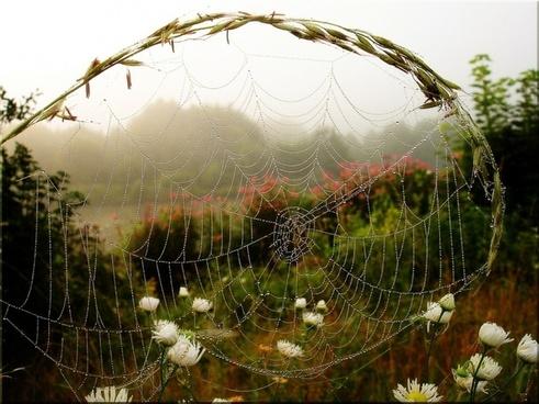 fog mood spinnweben morning light tautropfen