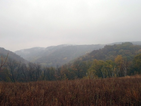 foggy autumn forest at great river bluffs state park minnesota