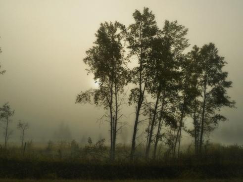 foggy morning tree