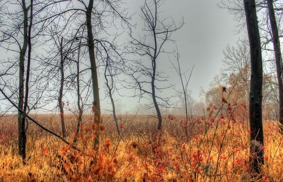 foggy wetland in madison wisconsin