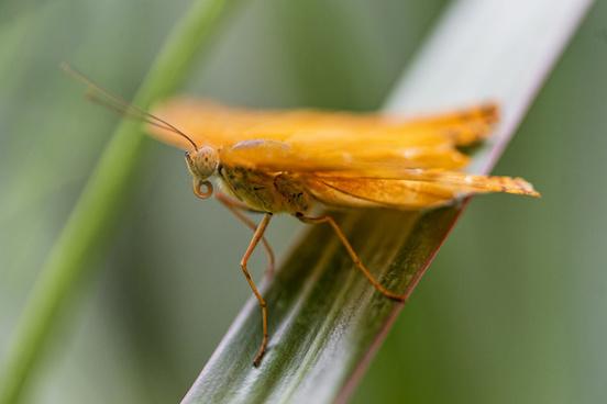 folded orange butterfly