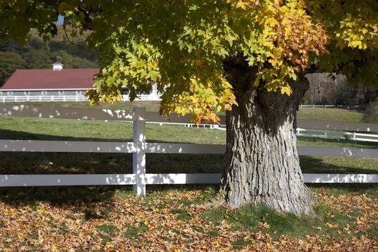 foliage fall autumn trees fence barn