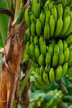 food fruit fresh