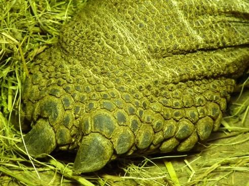 foot reptile steal