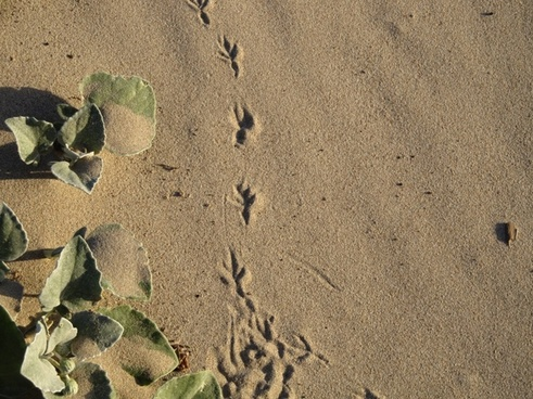 footprint bird sand