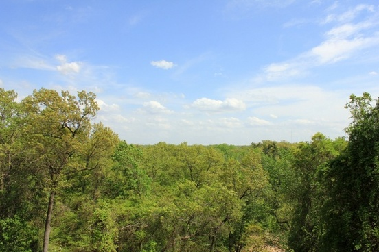 forest and sky at indiana dunes national lakeshore indiana