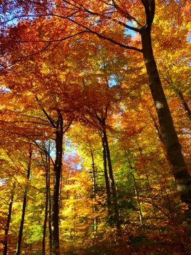 forest autumn forest colorful