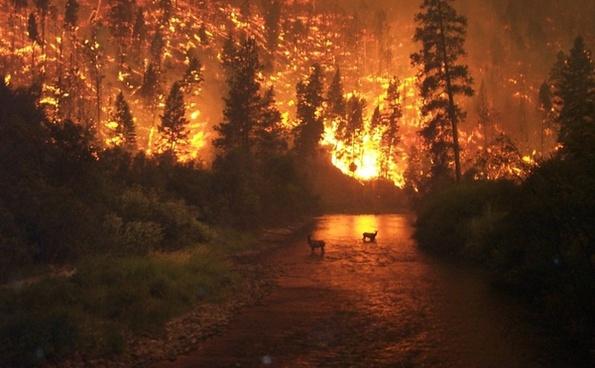 forest fire brand fire
