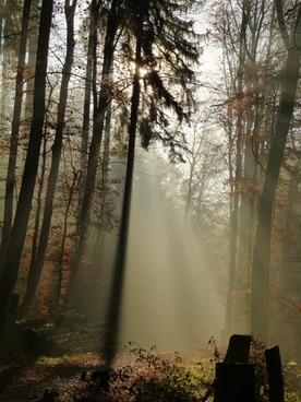 forest fog mood