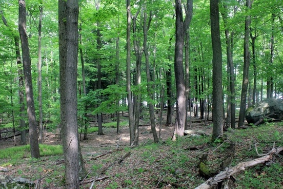 forest from a high vantage point in promised land pennsylvania