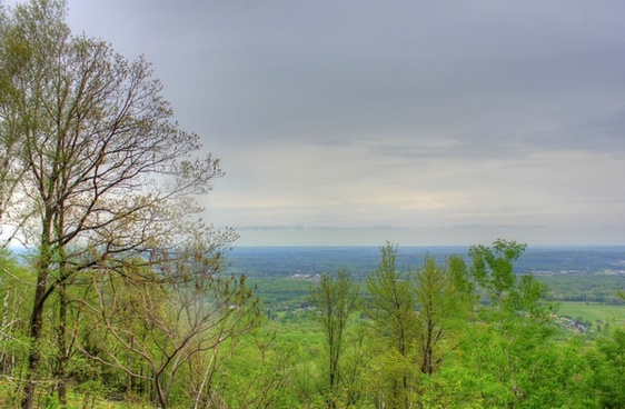 forest from the top at rib mountain state park wisconsin