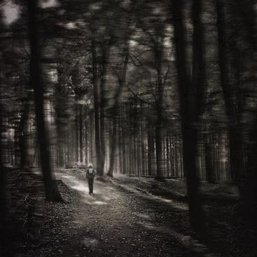 forest gloomy mood