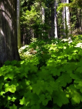 forest green plants