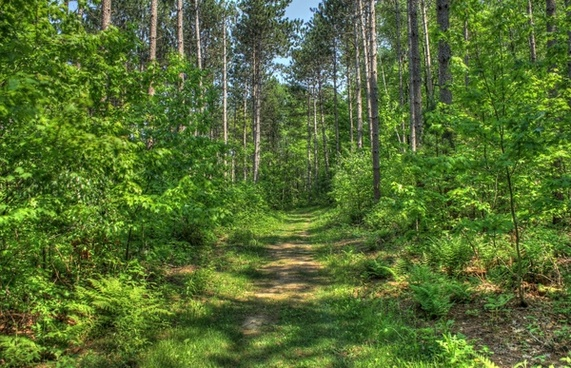 forest hiking path at hoffman hills state recreation area wisconsin