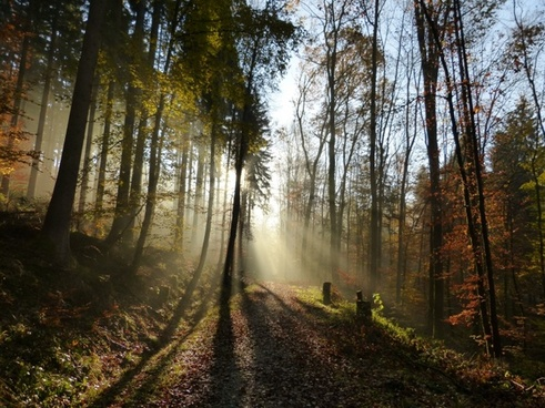 forest light shadow