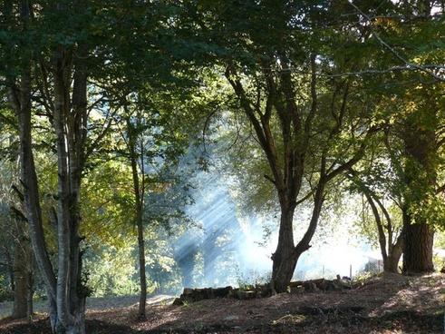 forest mist smoke