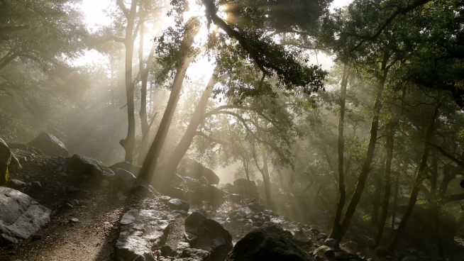 bright sun rays in forest