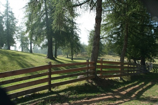 forest pasture fence