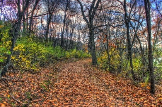 forest path in southern wisconsin
