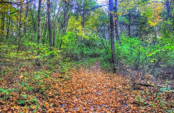 forest scenery at apple river canyon state park illinois
