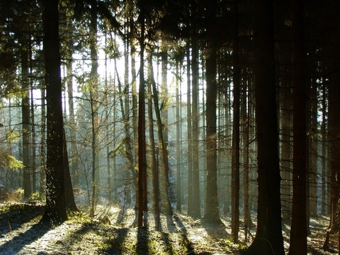 forest shadow trees