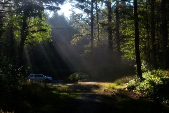 forest sunbeams early morning
