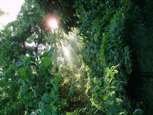 forest sunpeek