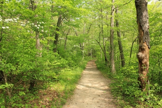 forest trail path at indiana dunes national lakeshore indiana