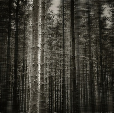 forest tree black white
