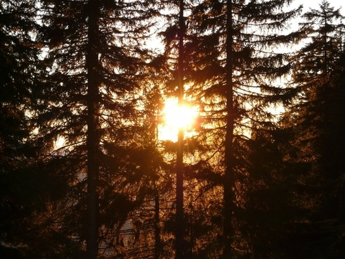 forest tree sun