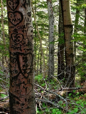 forest trees carved messages