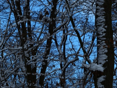 forest trees snowy