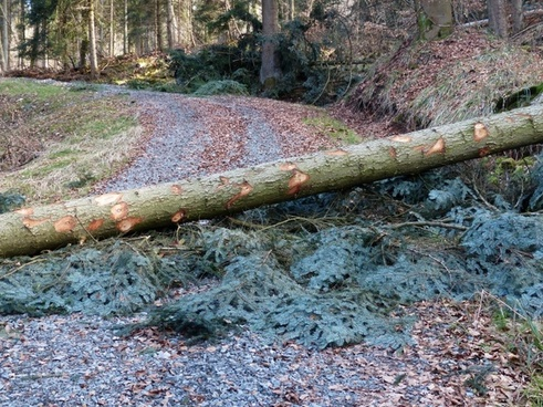 forest work wood casework road