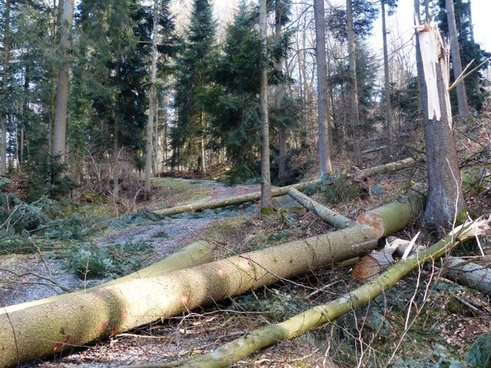 forest work wood casework tree trunks