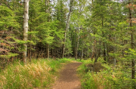 forested pathway at split rock lighthouse minnesota