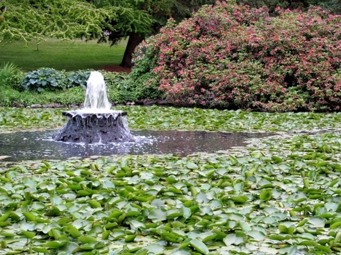 fountain and lily pads