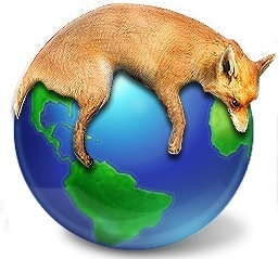 Fox lie on earth
