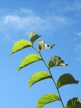 fplanze leaves green