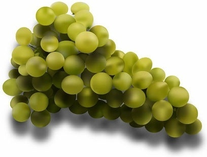 green grapes icons design realistic style